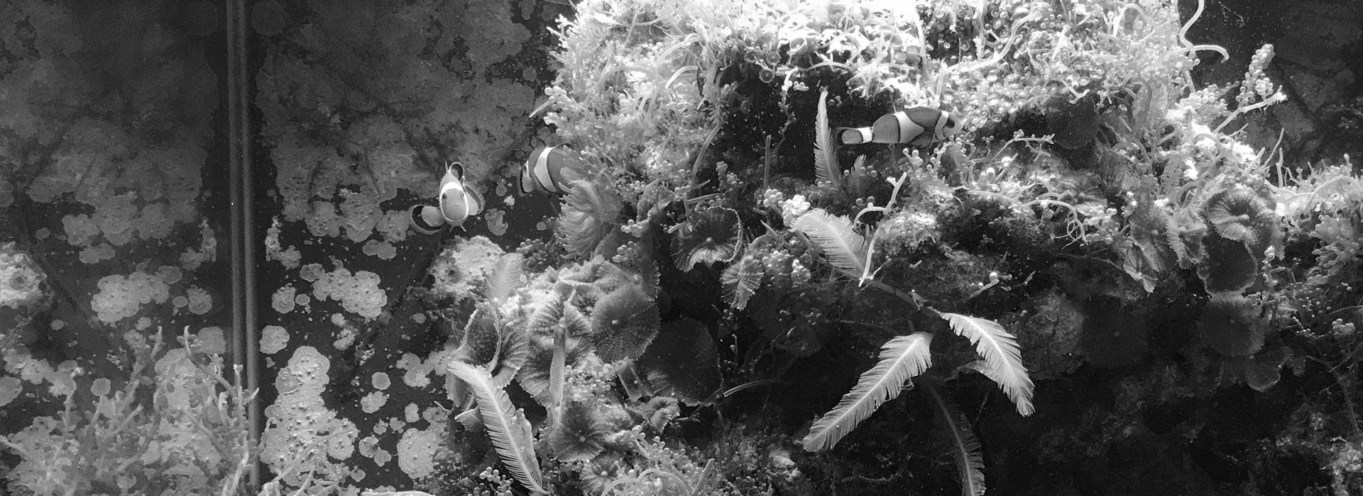 New piranha vendita pesci tropicali marini e d 39 acqua dolce for Pesci acqua dolce fredda laghetto