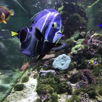pesci-tropicali