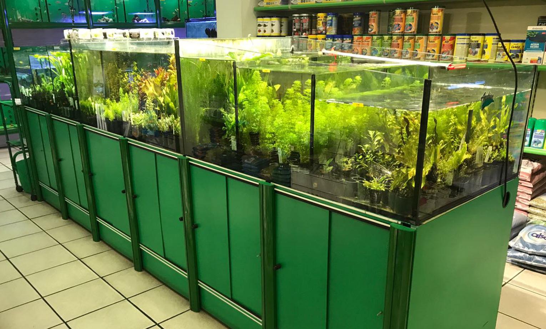 Allestimento caridinai piante muschi fondi rocce e for Legni per acquario