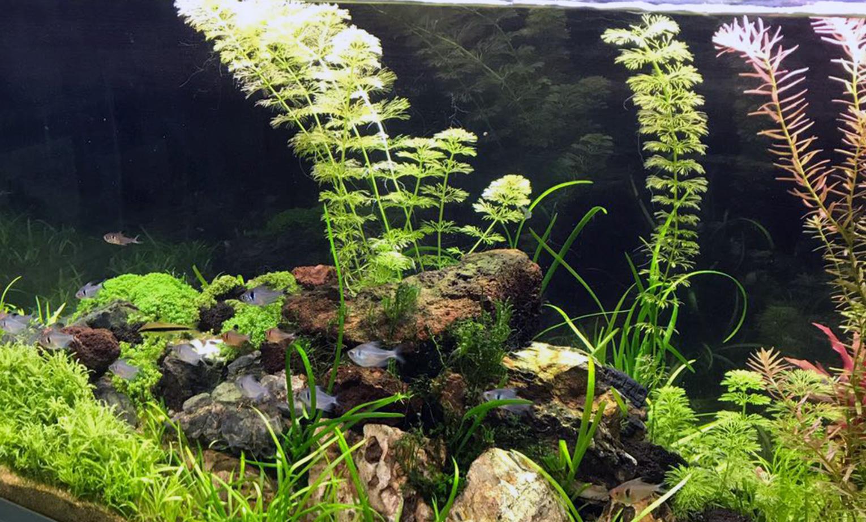 piante-acquario3