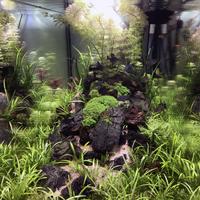 piante-coralli-acquario
