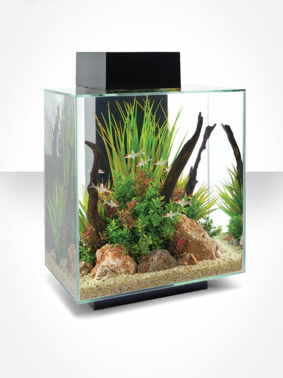 Idee regalo natale new piranha acquari gravina di catania for Regalo acquario
